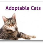 View Adoptable Cats
