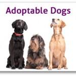 adoptable_dogs