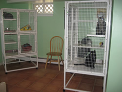 PAWS cat room
