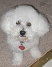 Bentley's photo