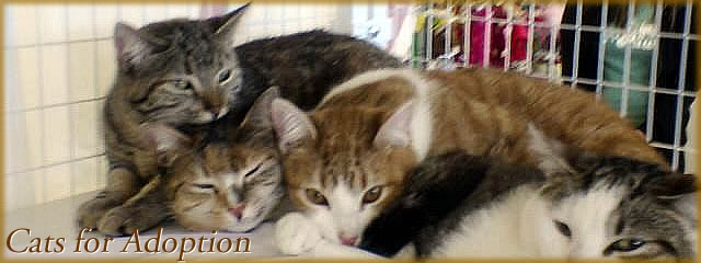 adoptable cats slider image