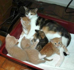 kittens with their mama