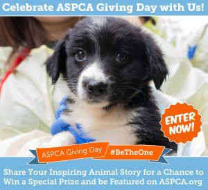 Be The One ASPCA Giving Day